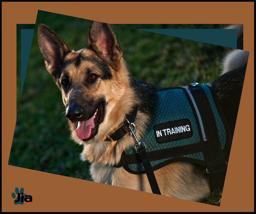 Adasdf Working Dog Equipment Service Dog Vests And Harness Dog