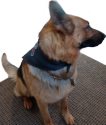 Embroidered Service Dog Bandanna