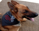 Embroidered Working Dog Bandanna