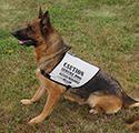 Total Reflective Dog Vest
