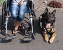 activedogs Wheelchair Pulling Leash