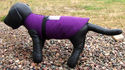 Soft Vested Harness for Small Working Dogs