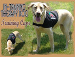 Therapy Dog Training Cape Vest