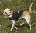 Small Dog Vest