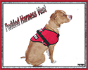 Padded Service Dog Vest