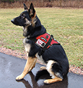 Padded Service Dog Vest
