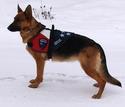 Patriotic Service Dog Vest