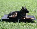 Raised Dog Bed with Ballistic Cover