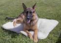 Sherpa Dog Bed; Faux Sherpa
