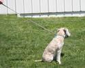 Heavy Cotton Dog Leash