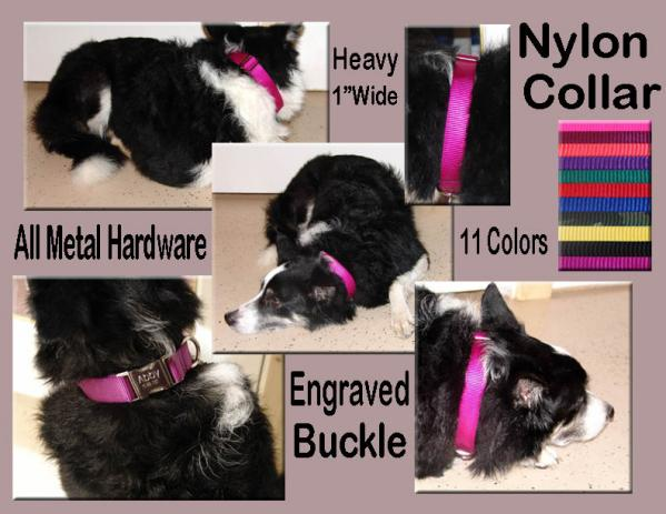 Nylon Dog Collar 1""