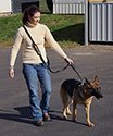 Hands Free Molded Handle Dog Leash