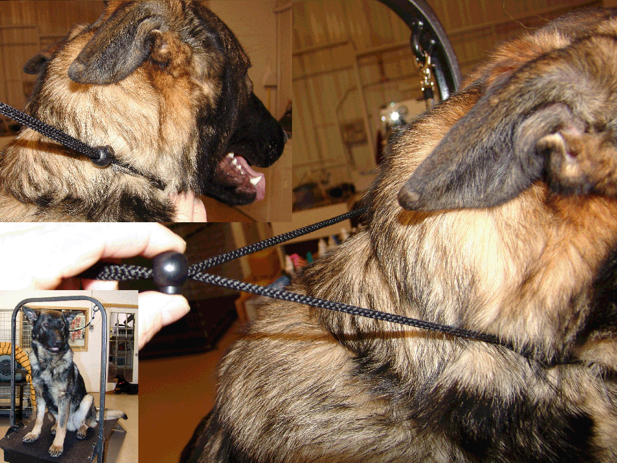 German Shephard with double grooming arm safety stand