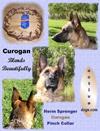 Herm Sprenger 4mm Curogan Pinch Collar
