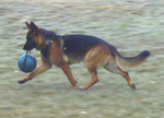 Dog Muscle Building Ball