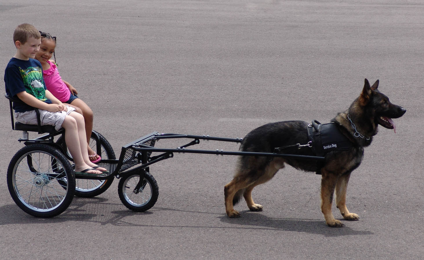 Is Training A Dog Or Horse Easier