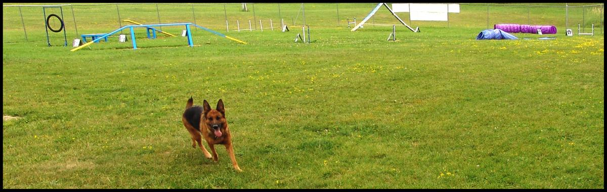 German Shepherd Training Field